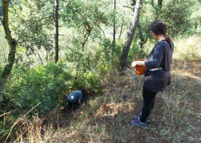 Presència del mosquit tigre al bosc (TFG)