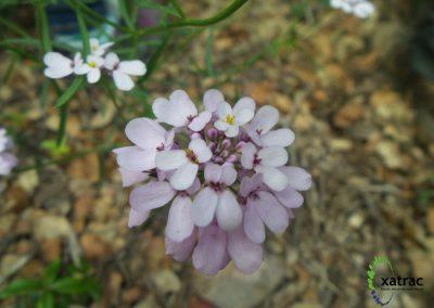 Estudi de la Flora i Vegetació del Mas Roig (Llagostera)