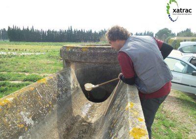 Programa de vigilància, seguiment i control de les poblacions de mosquit tigre a la demarcació de Girona
