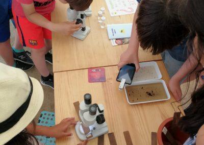 Programa Educatiu Mosquito Alert a Barcelona (ASPB i Consorci d'Educació de Barcelona)