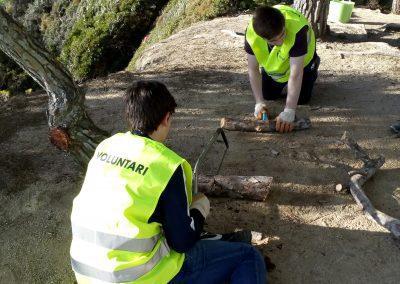 Millora de l'estat de conservació dels ecosistemes litorals i boscosos de Fenals.